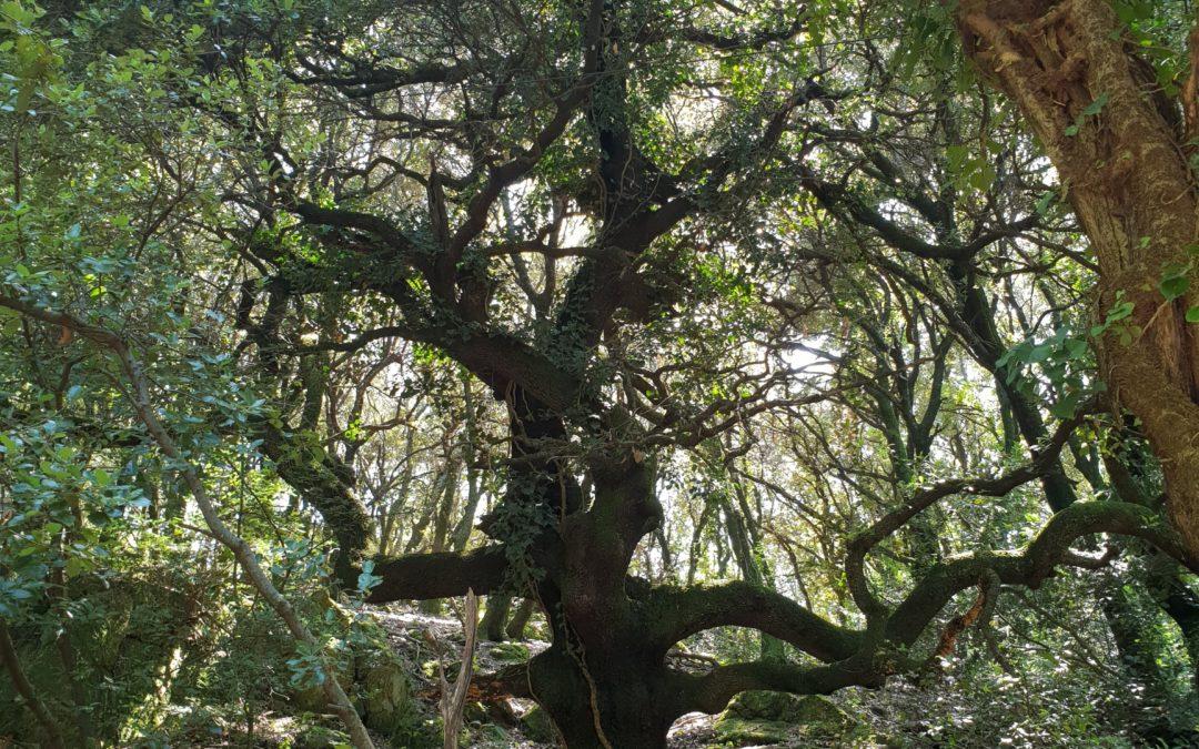 Zum Zusammenhang zwischen Rückführungen und spirituellen Rückführungen